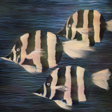 Ab durch die Mitte - Zebrafische von Christine Nöhmeier