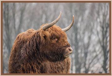 Mooie Schotse hooglander van SjennaFotografie