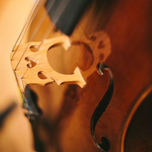 Cello von Colin van der Bel