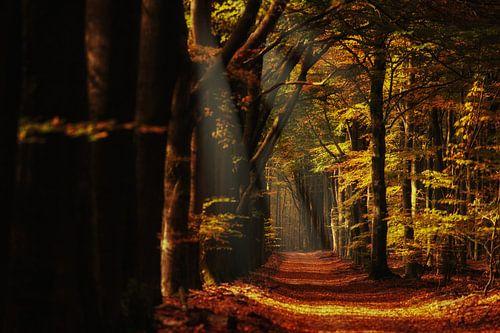 Herfst in het Speulderderbos op de Nederlandse Veluwe