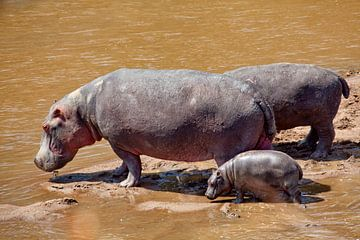 Nijlpaard met kind van Peter Michel