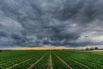 Wolkenvelden von Carla Matthee