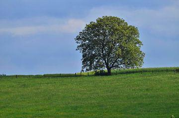 L'arbre van Georges Rudolph
