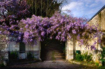 Blauwe Regen guirlande in Frankrijk van Hannie Kassenaar
