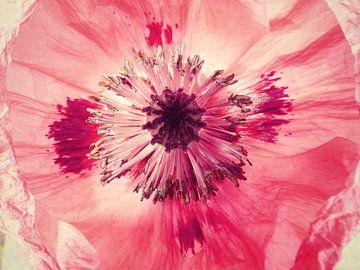 pink papaver van