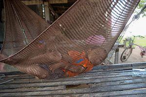 ANGKOR WAT, CAMBODIA, DECEMBER 6 2015 - Jongetje in hangmat op veranda van zijn huis vlakbij Angkor