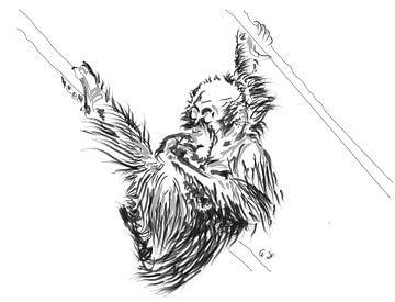 Orang-Utan Baby 2 von Go van Kampen