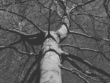 Een mooie boom van