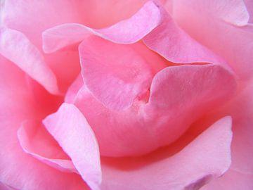 Roze roos van Mirjam van Ginkel