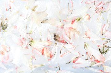 Pétales de fleurs congelées - Fleur rose sur Nicole Schyns