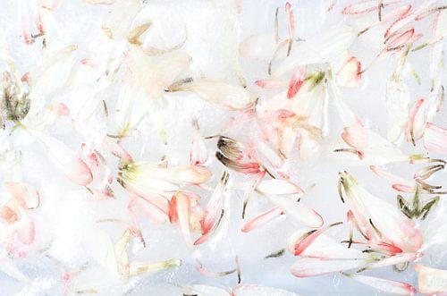 Frozen Flower Petals - Roze Bloesem van