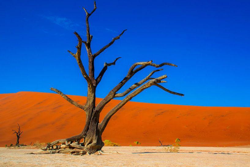 Geraamte van een boom in de Dode vallei, Namibië van Rietje Bulthuis
