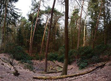 Veluws natuur in een kuil van Gerard de Zwaan