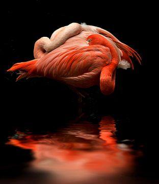 Flamingos van