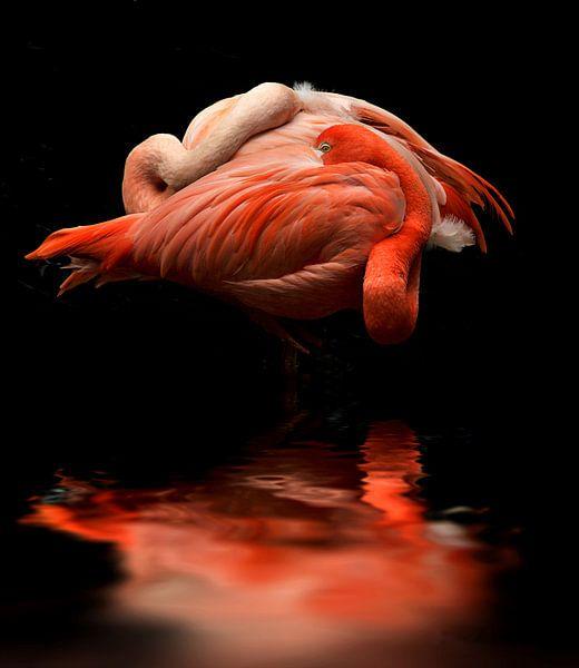 Flamingos von Vera Kämpfe