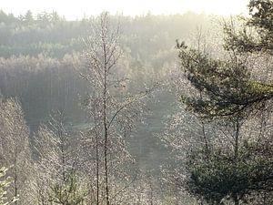 Bomen met veel regen druppeltjes. van Leo Quartel