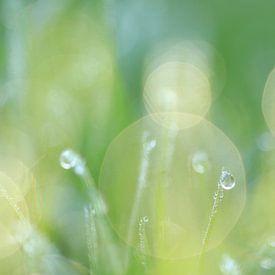 Gouttes dans l'herbe sur Fotografie Sybrandy