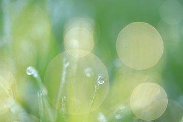 Gouttes dans l'herbe