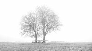 Bomen in Lentevreugd zwart/wit van Wim van Beelen