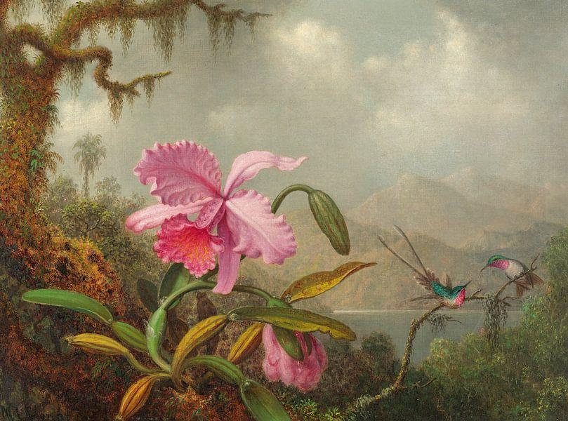 Orchideeën en kolibries, Martin Johnson Heade... van Meesterlijcke Meesters