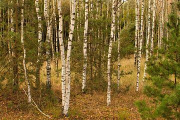 Witte bomen in het bos van JM de Jong-Jansen