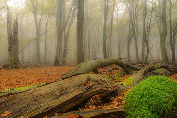 Dode boom en mos in de herfst mist van