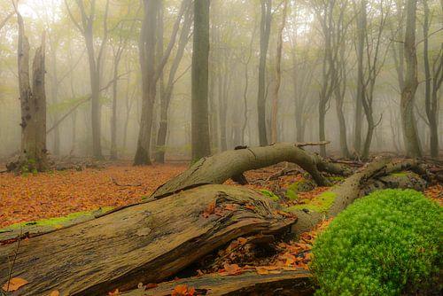 Dode boom en mos in de herfst mist van Sjoerd van der Wal
