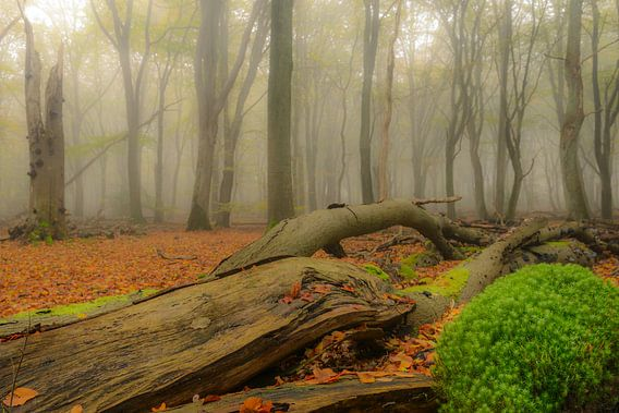 Dode boom en mos in de herfst mist