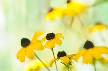 Gelbe Rudbeckia's von Corinne Welp