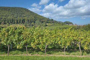Wijnlandschap bij Gleisweiler in de Pfalz van Peter Eckert