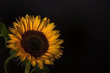 Zonnebloemen 6 von Joke Beers-Blom