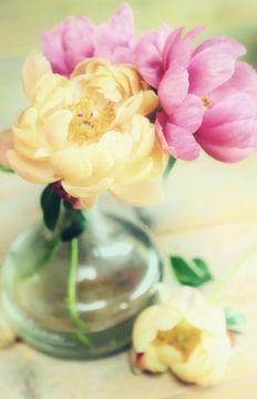 bloeiende bloemen pracht