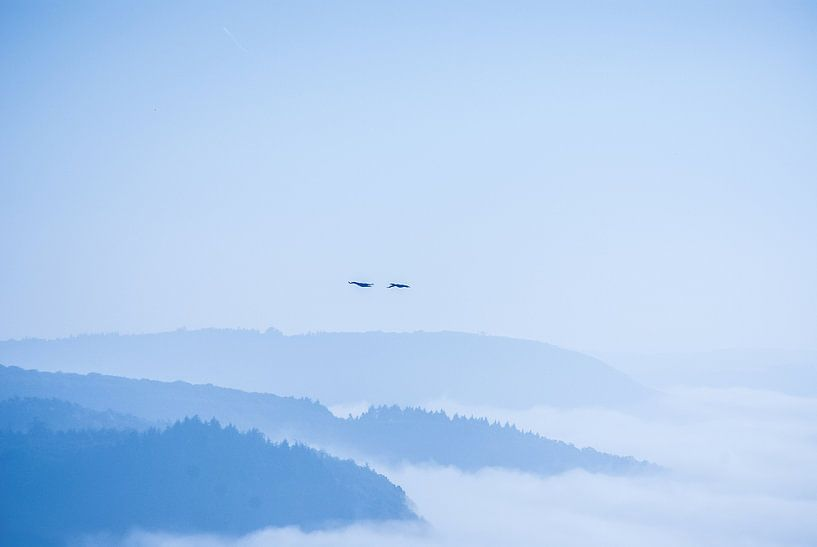 Above the fog van Studio  Milaan