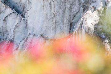 Glacier avec rose alpine au premier plan sur Barbara Brolsma