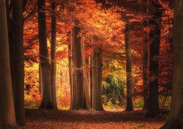 Herfst in Nederland von ProphotographyNL .