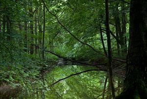 Bos en water van