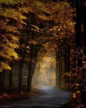 Sun Forest Sun sur Kees van Dongen