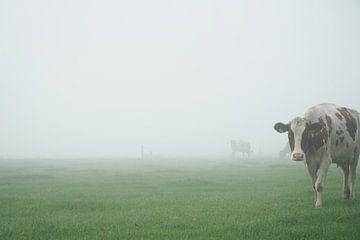 nieuwsgierige koe in mistig weiland von Karin in't Hout