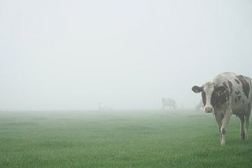 nieuwsgierige koe in mistig weiland van Karin in't Hout