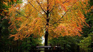 Warme Herbstfarben von Sran Vld Fotografie