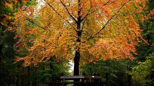Warme herfst kleuren