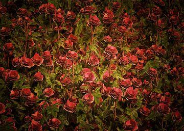 Rozen – Kardinaal Richelieu rozen
