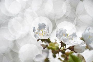 bloesem met zonneglittertjes von George Burggraaff