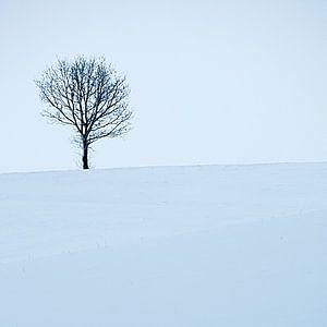 Boom en sneeuw van