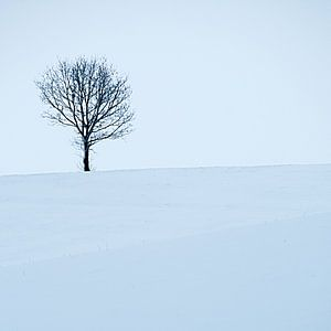 Boom en sneeuw