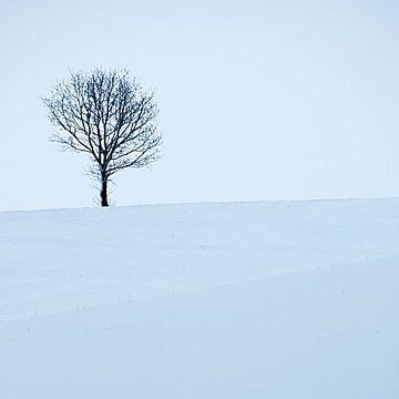 Boom en sneeuw sur Douwe Schut