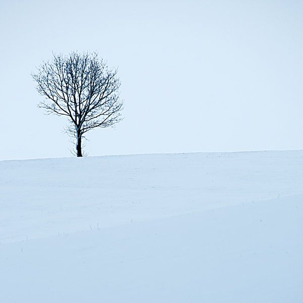 Boom en sneeuw van Douwe Schut