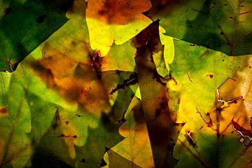 Herfstbladeren 11 van Henk Leijen