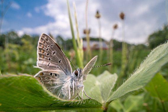 vlinder van Paul Glastra Photography