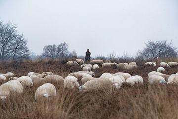 Schaapherder en kudde 02 von Cilia Brandts